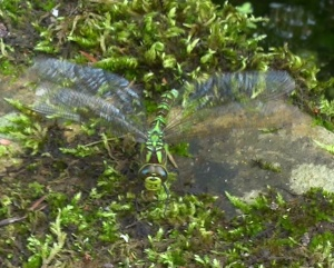 Dragonfly Blog XI