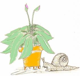 Snail Blog XX