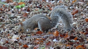 Squirrel-2-BLOG-XIX